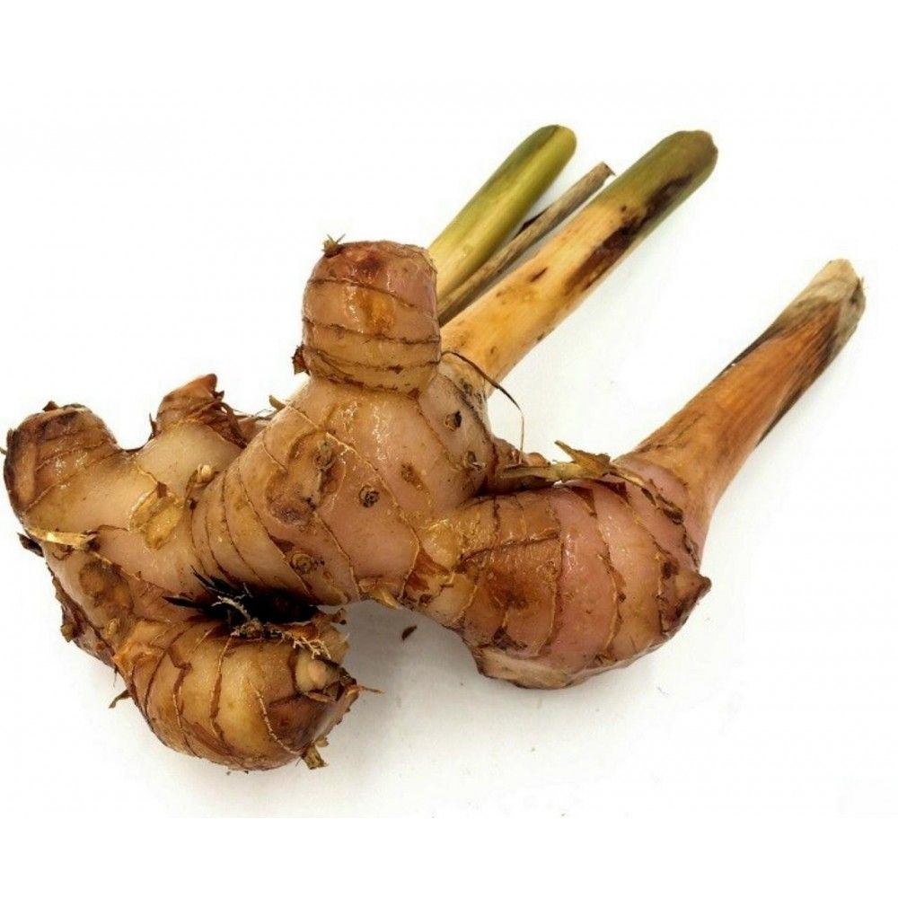 Greater Galangal